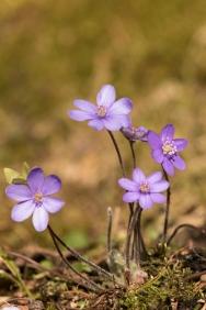 fruehlingsblumen_35A0043