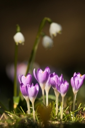 fruehlingsblumen_35A0052