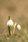 fruehlingsblumen_35A0160