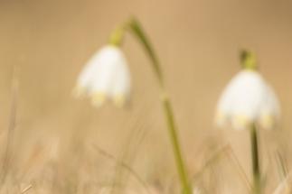 fruehlingsblumen_35A0179