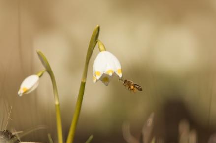 fruehlingsblumen_35A0193