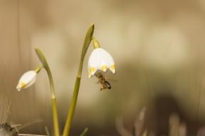 fruehlingsblumen_35A0194