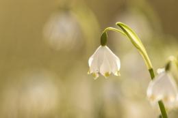 fruehlingsblumen_35A0239
