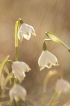 fruehlingsblumen_35A0277
