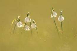 fruehlingsblumen_35A0288