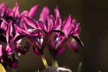 fruehlingsblumen_35A0300