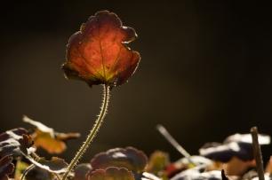 fruehlingsblumen_35A0301