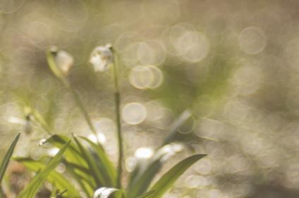 fruehlingsblumen_35A0311
