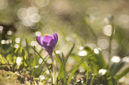 fruehlingsblumen_35A0320