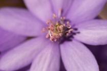 fruehlingsblumen_35A0423