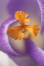 fruehlingsblumen_35A0475