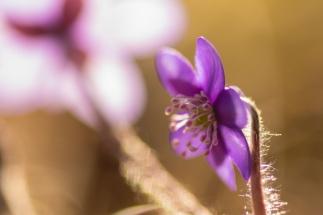 fruehlingsblumen_35A0514