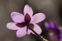 fruehlingsblumen_35A0534