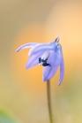 fruehlingsblumen_35A0570